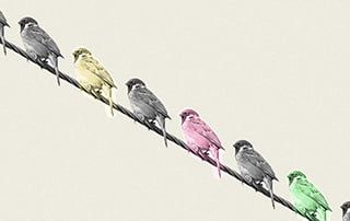 Line up of birds